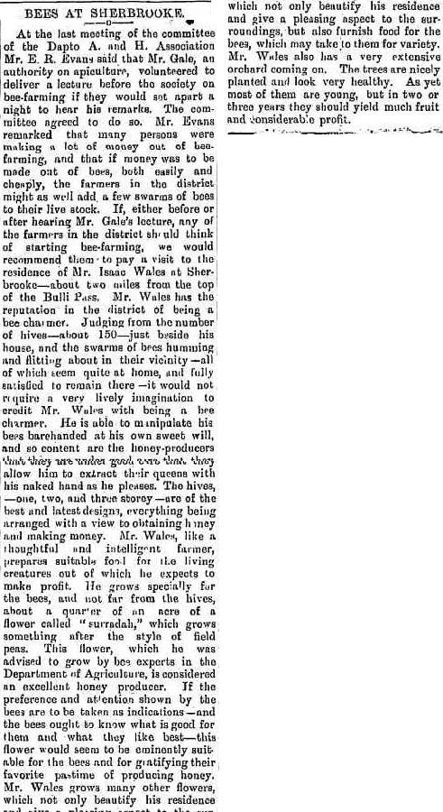 Isaac Wales and Honey - Illawarra Mercury January 3 1894.